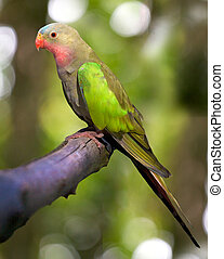 a portrait of a princess parakeet