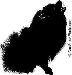 A portrait of a purebred male Keeshond (German Wolfspitz). Black silhouette of spitz. Spitz dog