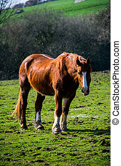 A portrait of brown and white horse looking straight ahead