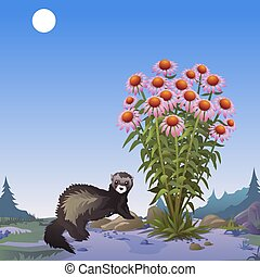 A poster on the theme of wildlife. Mongoose near to a bush of Echinacea. Vector cartoon close-up illustration.