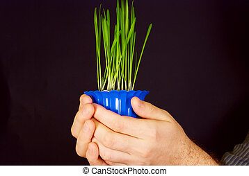 a pot of green shoots in the hands of men