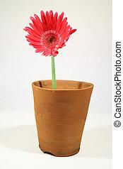 A pot plant - A flower in a plant pot