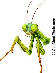 A praying mantis - Illustration of a praying mantis on a...