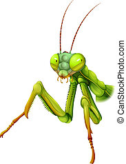Illustration of a praying mantis on a white background