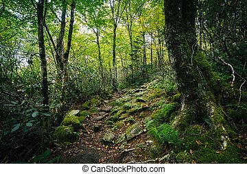 a, pretas, rocha, natureza, rastro, em, avô, montanha,...
