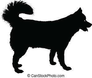 Husky - A profile of a Husky dog in black silhouette.