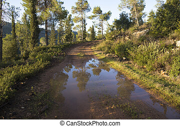 A Puddle in the Forest