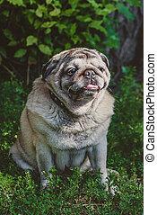 a pug dog is sitting under the bush
