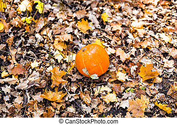 pumpkin in autumn leaves.