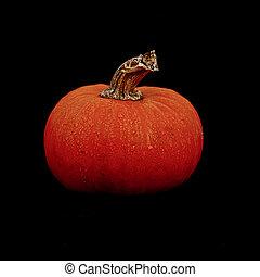 Pumpkin on Black