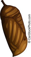 A pupa on white background