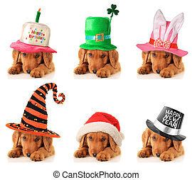 A puppy for every occasion. Birthday, St Patrick's, Easter,...