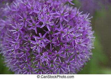 A purple flower bloom.