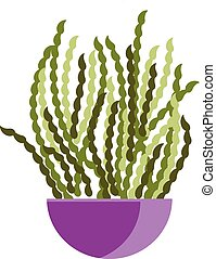 A purple flower pot with spiral standing plants vector color drawing or illustration