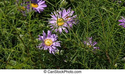 A purple flower shot