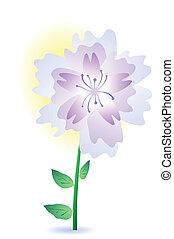 a purple summer flower