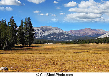 A quiet part of Yosemite Park