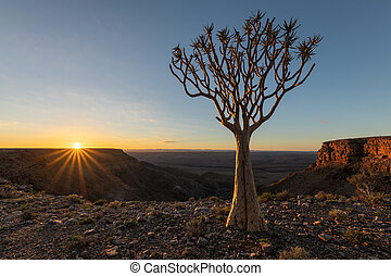 A Quiver tree at sunrise on the top of the Fish River Canyon