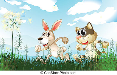 A rabbit and a cat at the field