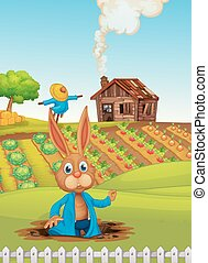 A rabbit at the farm
