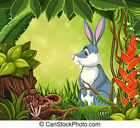 A rabbit in jungle background