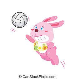 a rabbit's beach activities