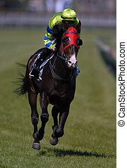 A race horse in action during a race.