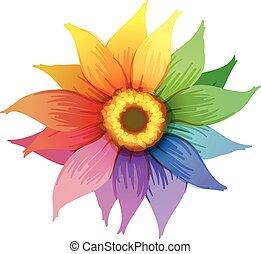 A rainbow flower