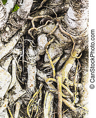 a, raiz, de, árvore