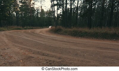 A rally car in the forest