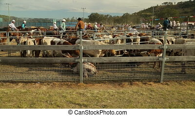 A ranch with the people, cattles and horses - A still wide...