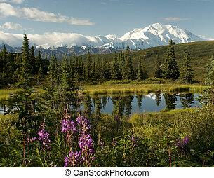 Denali  - A rare clear day showing Denali in Alaska.