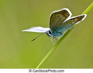 butterfly in natural habitat