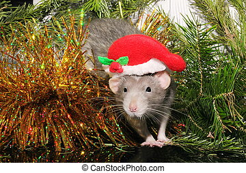 Christmas gray rat on the background of a natural Christmas tree