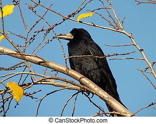 A raven sitting on a branch