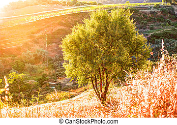 A ray of light breaks through the dramatic sky at sunset and hit a solitary tree on a hill