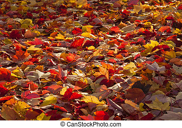 A ray of sunlight on autumn leaves.