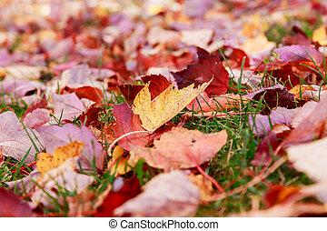 ray of sunlight on the fallen autumn leaves.