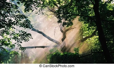 a ray of sunshine through the trees