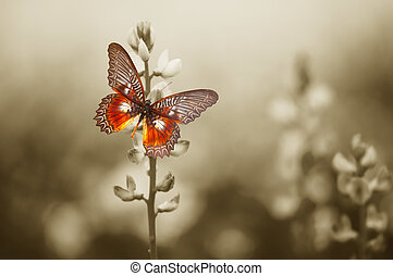 A red butterfly on the moody field - A red butterfly in the...