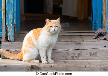 A red cat is sitting on the porch