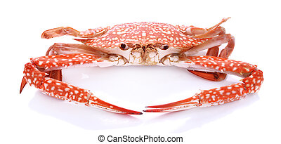 Red crab isolated on white background