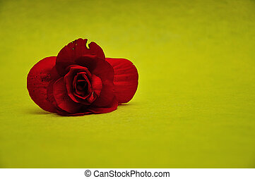 A red flower on a yellow background