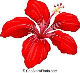 A red hibiscus plant - Illustration of a red hibiscus plant...