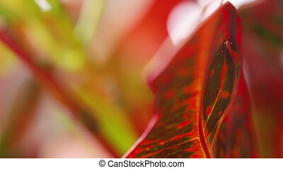 A red leaf close up shot