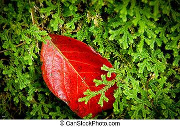 A red leaf on a green fern