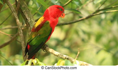 A Red Parrot Resting On A Branch