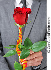 a red rose for Sant Jordi Day in Catalonia, Spain