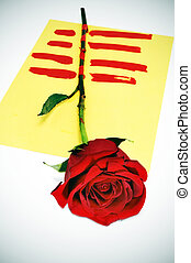 a red rose with the senyera, a catalan tradition for the roses day