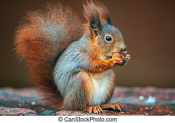 a red squirrel in the forest